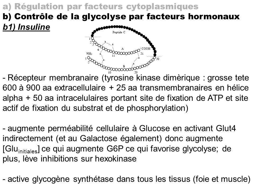 a) Régulation par facteurs cytoplasmiques b) Contrôle de la glycolyse par facteurs hormonaux b1) Insuline - Récepteur membranaire (tyrosine kinase dim