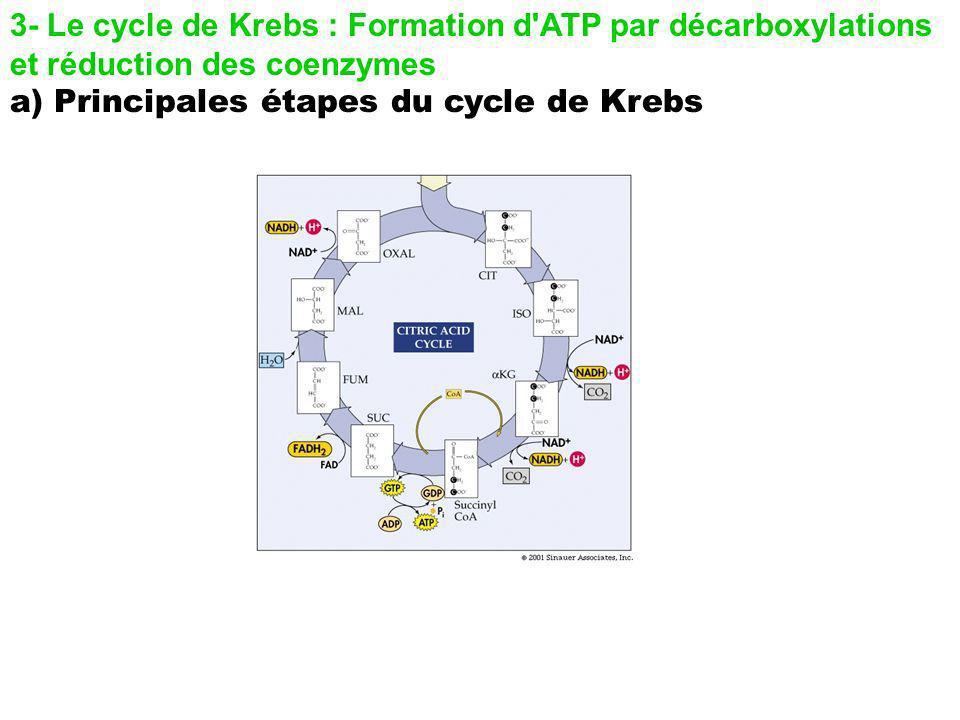 3- Le cycle de Krebs : Formation d'ATP par décarboxylations et réduction des coenzymes a) Principales étapes du cycle de Krebs