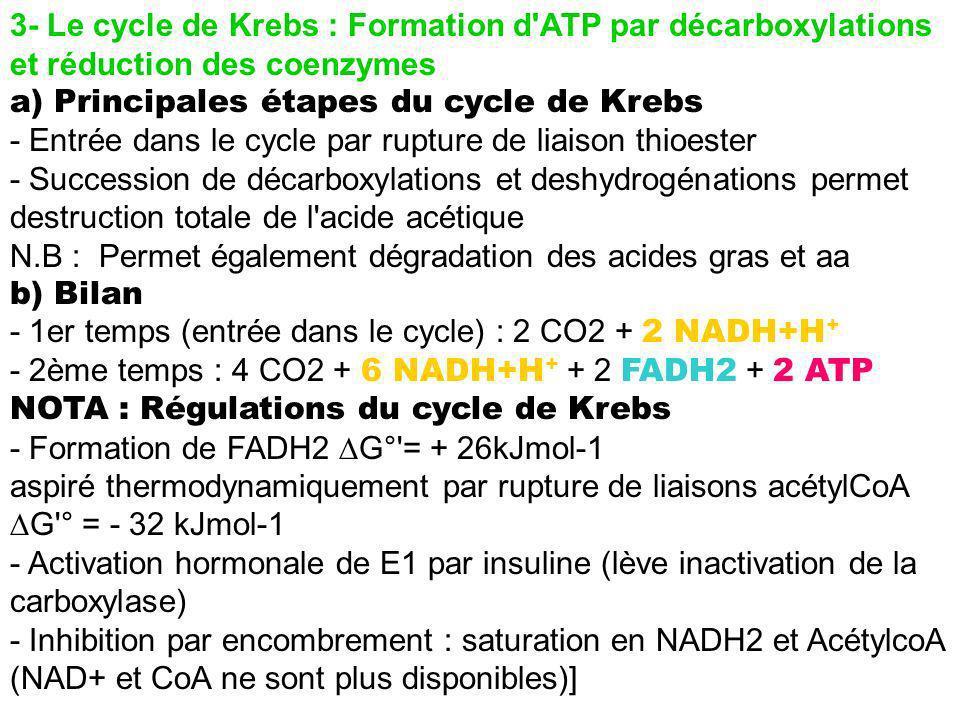 3- Le cycle de Krebs : Formation d'ATP par décarboxylations et réduction des coenzymes a) Principales étapes du cycle de Krebs - Entrée dans le cycle