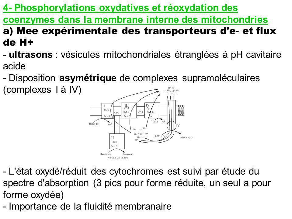 4- Phosphorylations oxydatives et réoxydation des coenzymes dans la membrane interne des mitochondries a) Mee expérimentale des transporteurs d'e- et