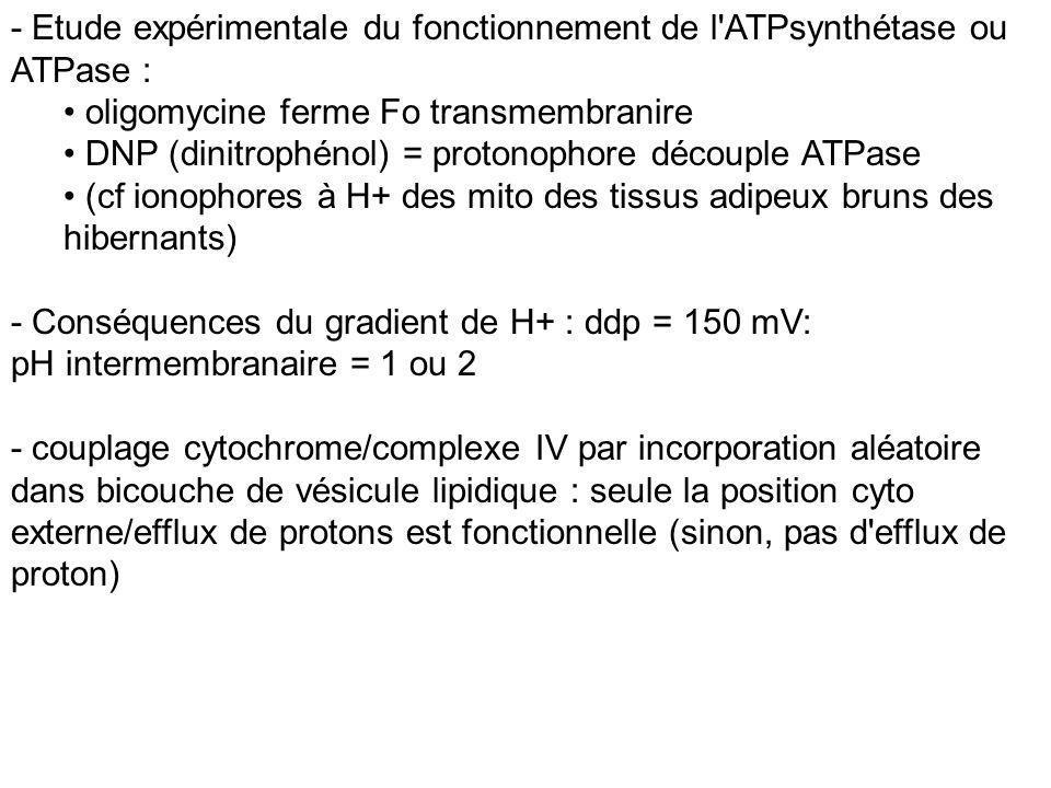 - Etude expérimentale du fonctionnement de l'ATPsynthétase ou ATPase : oligomycine ferme Fo transmembranire DNP (dinitrophénol) = protonophore découpl