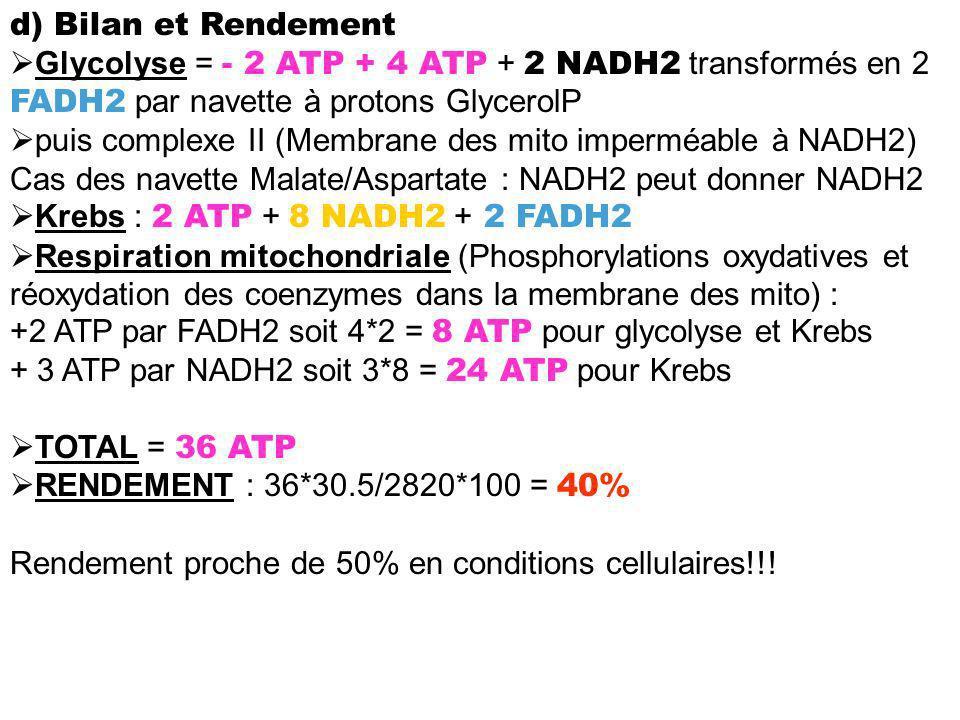 d) Bilan et Rendement Glycolyse = - 2 ATP + 4 ATP + 2 NADH2 transformés en 2 FADH2 par navette à protons GlycerolP puis complexe II (Membrane des mito