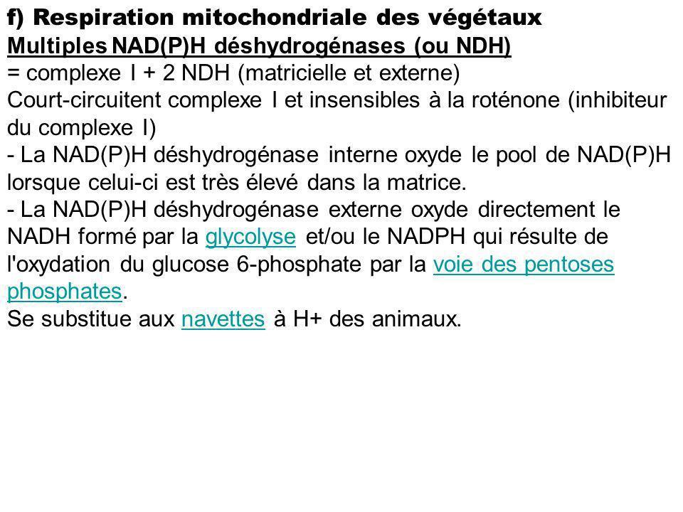 f) Respiration mitochondriale des végétaux Multiples NAD(P)H déshydrogénases (ou NDH) = complexe I + 2 NDH (matricielle et externe) Court-circuitent c