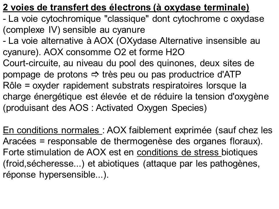 2 voies de transfert des électrons (à oxydase terminale) - La voie cytochromique