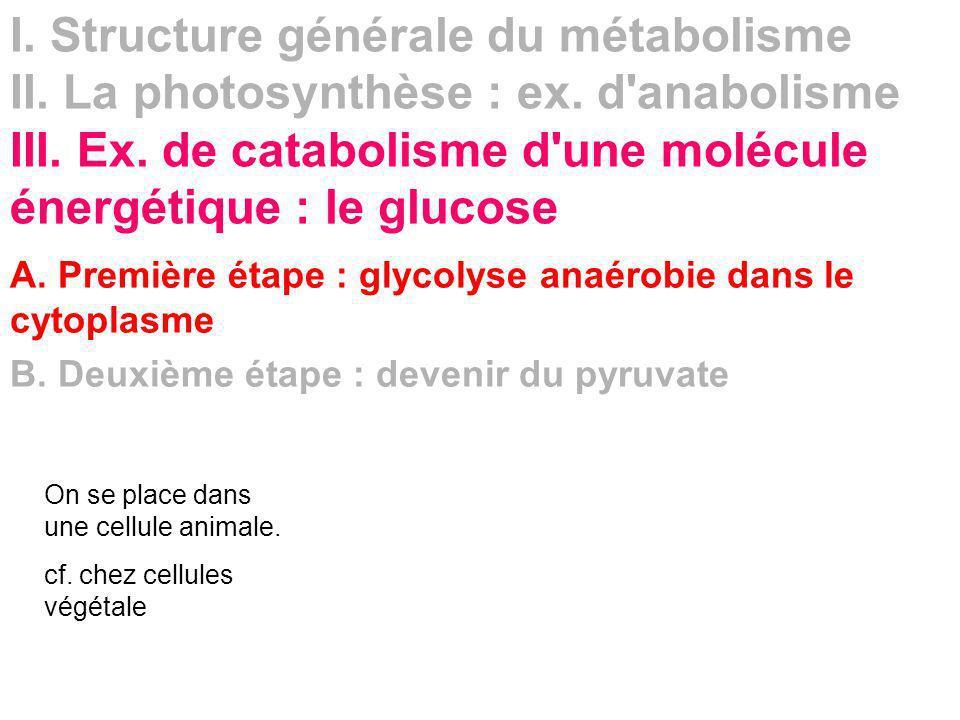 I. Structure générale du métabolisme II. La photosynthèse : ex. d'anabolisme III. Ex. de catabolisme d'une molécule énergétique : le glucose A. Premiè