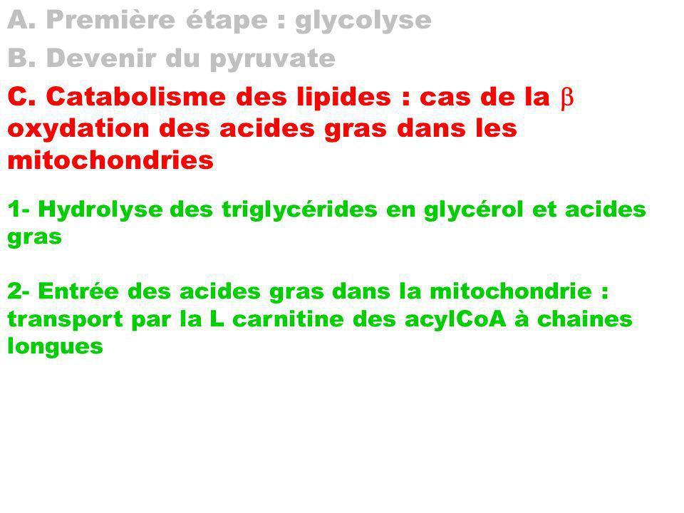 A. Première étape : glycolyse B. Devenir du pyruvate C. Catabolisme des lipides : cas de la oxydation des acides gras dans les mitochondries 1- Hydrol