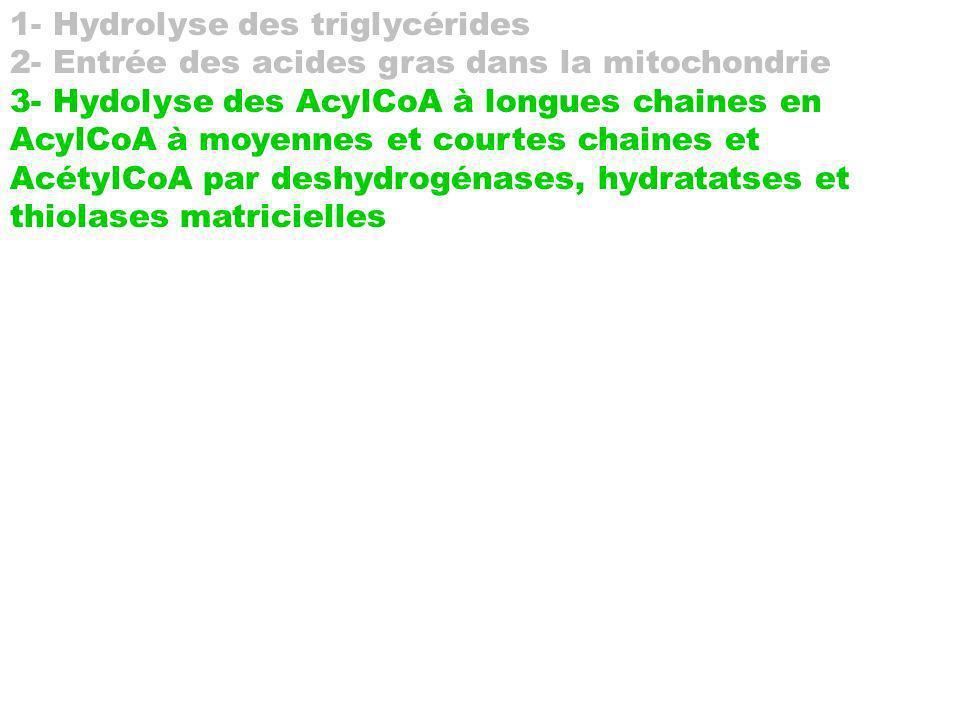 1- Hydrolyse des triglycérides 2- Entrée des acides gras dans la mitochondrie 3- Hydolyse des AcylCoA à longues chaines en AcylCoA à moyennes et court