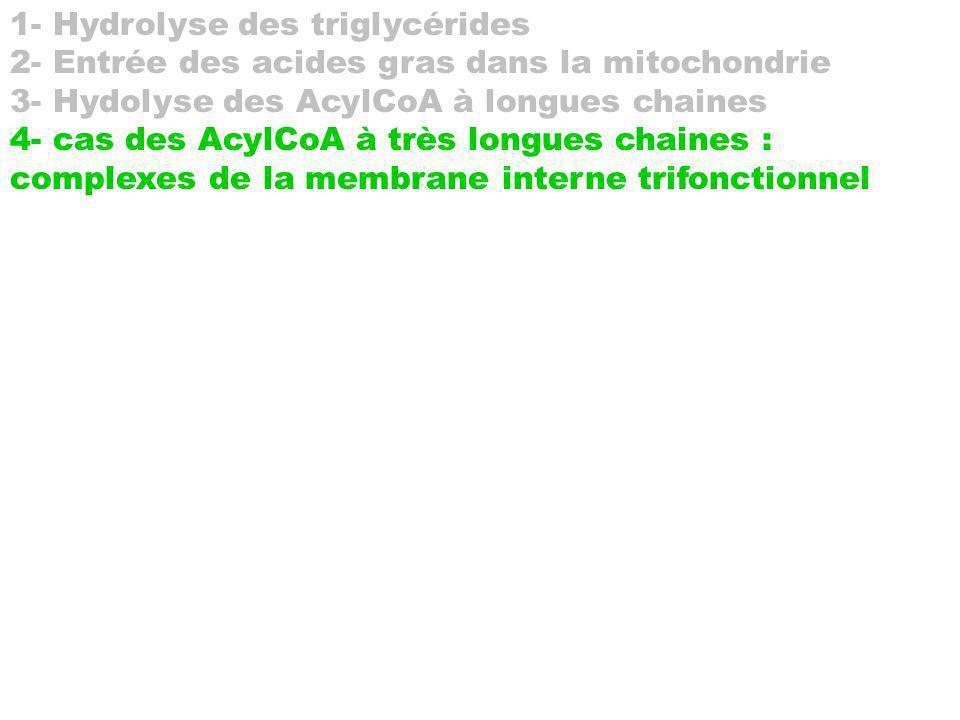 1- Hydrolyse des triglycérides 2- Entrée des acides gras dans la mitochondrie 3- Hydolyse des AcylCoA à longues chaines 4- cas des AcylCoA à très long