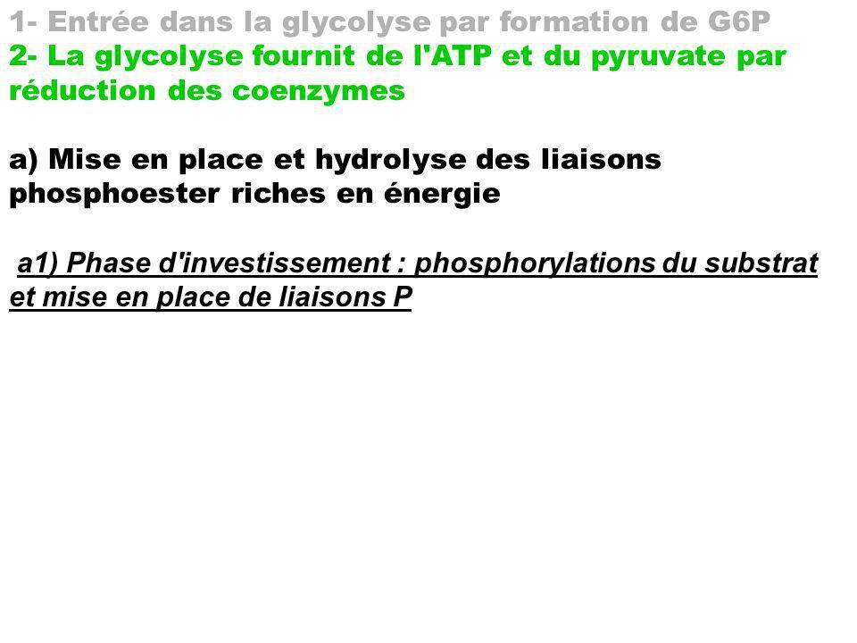 3 : ATP + H2O ADP avec r1 G° = -30,5 kJmol-1 F6P F1-6diP avec r2 G° = +16.3 kJmol-1 Bilan : r1+2 G° = -14.2 kJmol-1 2 : G6P F6P avec rG° = +2,2 kJmol-1 1 : ATP + H2O ADP avec r1 G° = -30,5 kJmol-1 Gluc G6P avec r2 G° = +14 kJmol-1 Bilan : r1+2 G° = -16.5 kJmol-1 scission (par une aldolase) du F1-6diP en Glycéraldéhyde3P : rG° = +23 kJmol-1 tiré ensuite par conversion de ac.1-3diPglycérique 2 ac.3Pglycériques, rG° = - 24 kJmol-1 (fois 2!)