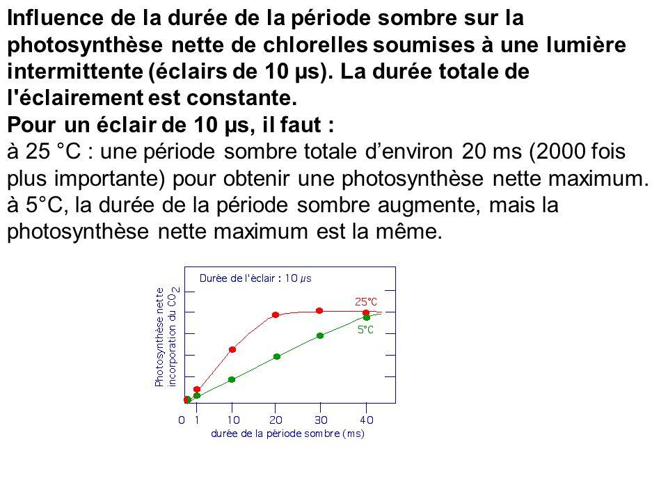 Influence de la durée de la période sombre sur la photosynthèse nette de chlorelles soumises à une lumière intermittente (éclairs de 10 µs). La durée