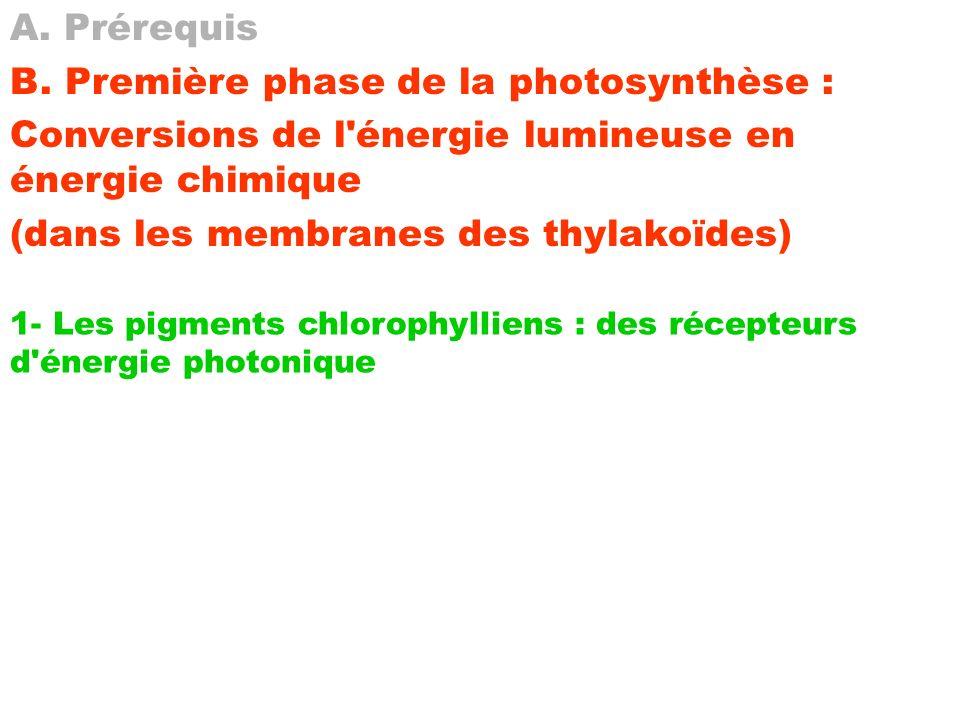 A. Prérequis B. Première phase de la photosynthèse : Conversions de l'énergie lumineuse en énergie chimique (dans les membranes des thylakoïdes) 1- Le