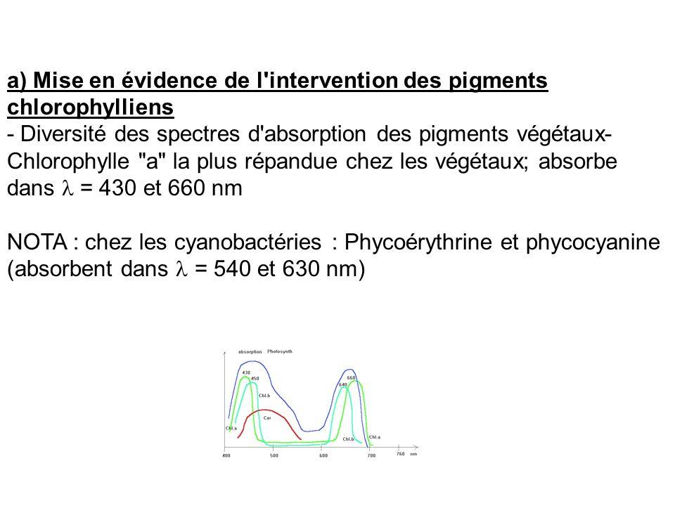 a) Mise en évidence de l'intervention des pigments chlorophylliens - Diversité des spectres d'absorption des pigments végétaux- Chlorophylle