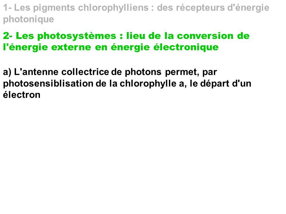 1- Les pigments chlorophylliens : des récepteurs d'énergie photonique 2- Les photosystèmes : lieu de la conversion de l'énergie externe en énergie éle