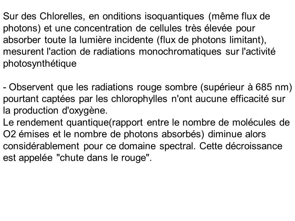 Sur des Chlorelles, en onditions isoquantiques (même flux de photons) et une concentration de cellules très élevée pour absorber toute la lumière inci