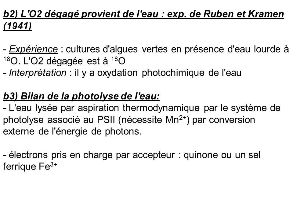 b2) L'O2 dégagé provient de l'eau : exp. de Ruben et Kramen (1941) - Expérience : cultures d'algues vertes en présence d'eau lourde à 18 O. L'O2 dégag