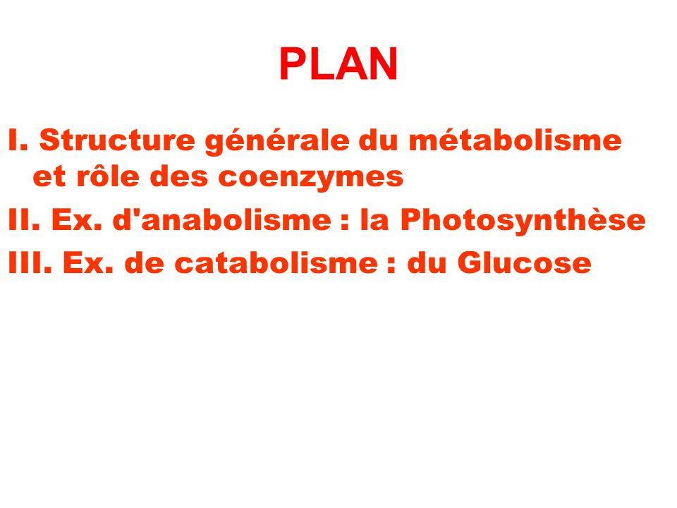 PLAN I. Structure générale du métabolisme et rôle des coenzymes II. Ex. d'anabolisme : la Photosynthèse III. Ex. de catabolisme : du Glucose