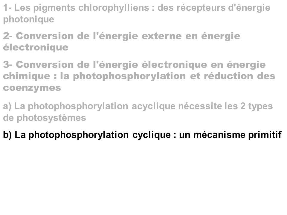 1- Les pigments chlorophylliens : des récepteurs d'énergie photonique 2- Conversion de l'énergie externe en énergie électronique 3- Conversion de l'én