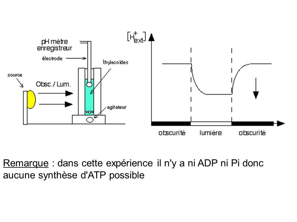 Remarque : dans cette expérience il n'y a ni ADP ni Pi donc aucune synthèse d'ATP possible