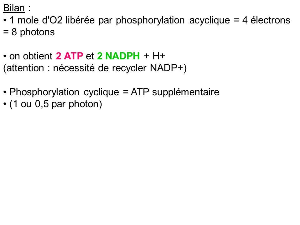 Bilan : 1 mole d'O2 libérée par phosphorylation acyclique = 4 électrons = 8 photons on obtient 2 ATP et 2 NADPH + H+ (attention : nécessité de recycle
