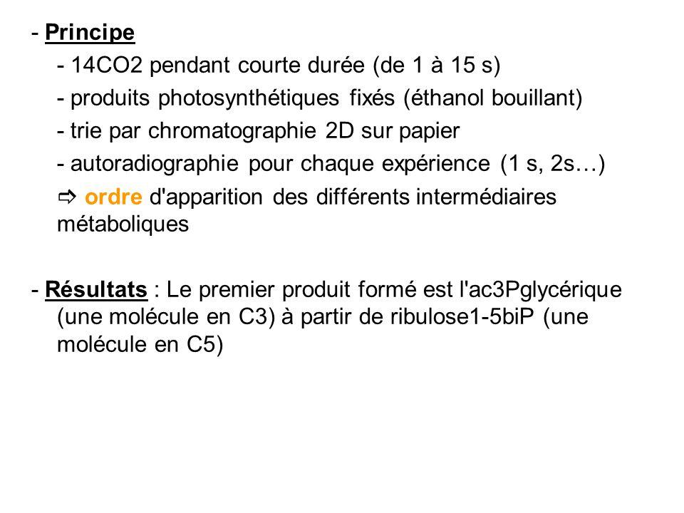 - Principe - 14CO2 pendant courte durée (de 1 à 15 s) - produits photosynthétiques fixés (éthanol bouillant) - trie par chromatographie 2D sur papier