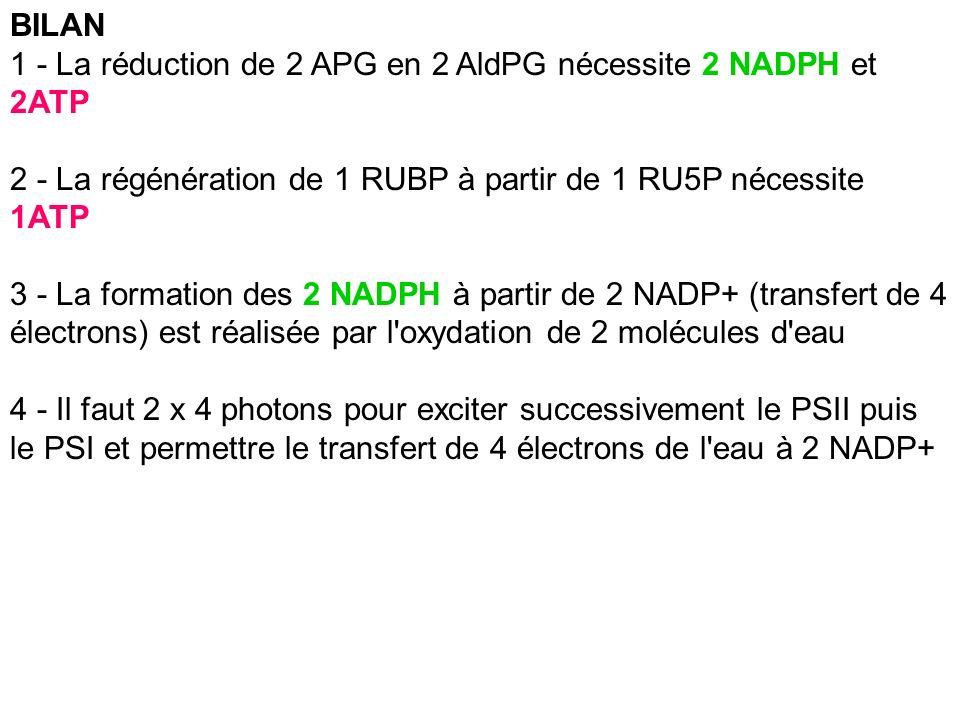 BILAN 1 - La réduction de 2 APG en 2 AldPG nécessite 2 NADPH et 2ATP 2 - La régénération de 1 RUBP à partir de 1 RU5P nécessite 1ATP 3 - La formation