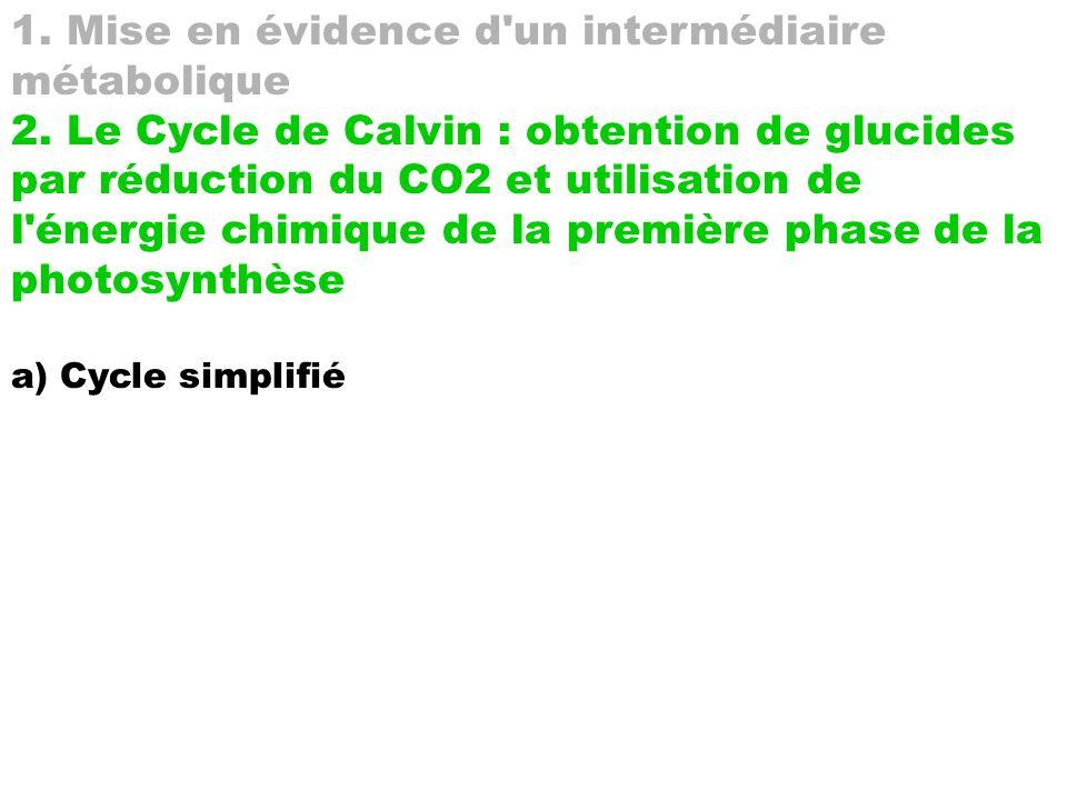 1. Mise en évidence d'un intermédiaire métabolique 2. Le Cycle de Calvin : obtention de glucides par réduction du CO2 et utilisation de l'énergie chim