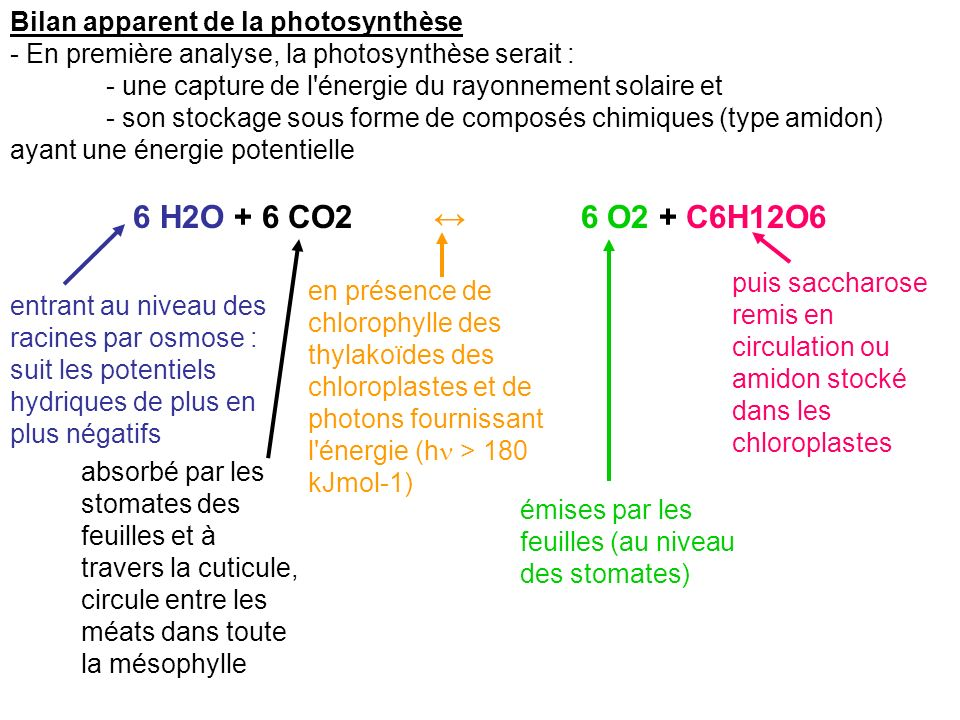 b) Les photons sont riche en énergie Notion de photon : - Quantum d énergie porté par onde électromagnétique - Origine : réactions thermonucléaires solaires : 4H He + 2e- + h - Energie du photon : W = h = h c/ - avec c = 3.10 8 ms -1 et - h = constante de Planck = 6.62.10 -34 Js (donc hc=19.8 10 -26 ) Dans le bleu = 430 nm; W = -280 kJmol -1 = -2.9 eV Dans le rouge = 660 nm ; W = -180 k Jmol -1 = -1.9 eV rG° = - 96.5 E ° (s exprime en électron Volt (eV)
