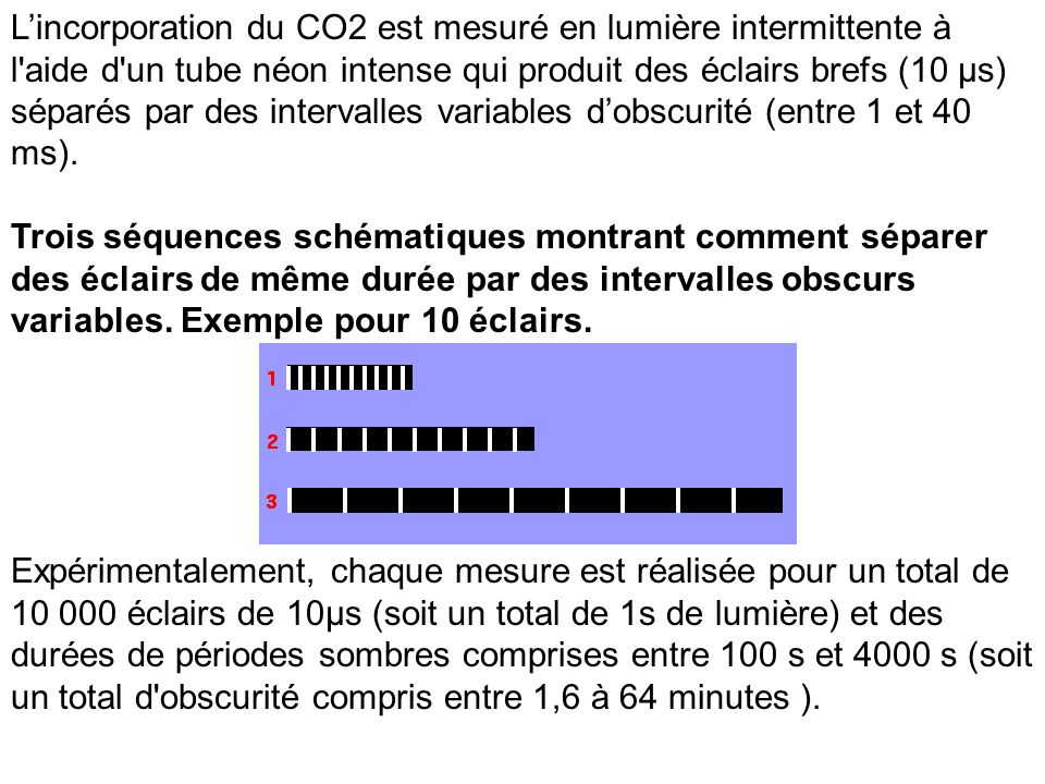 Lincorporation du CO2 est mesuré en lumière intermittente à l'aide d'un tube néon intense qui produit des éclairs brefs (10 µs) séparés par des interv