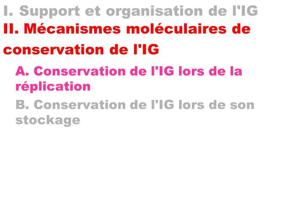 I. Support et organisation de l'IG II. Mécanismes moléculaires de conservation de l'IG A. Conservation de l'IG lors de la réplication B. Conservation