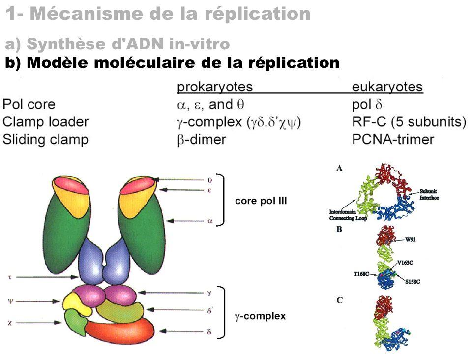 1- Mécanisme de la réplication a) Synthèse d'ADN in-vitro b) Modèle moléculaire de la réplication