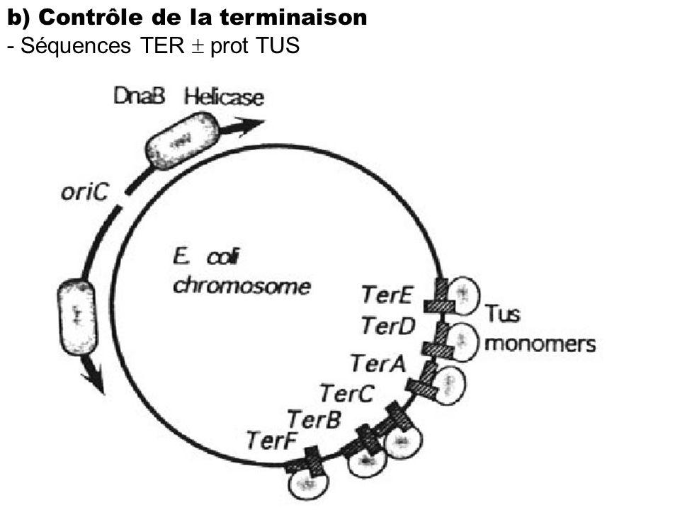 b) Contrôle de la terminaison - Séquences TER prot TUS
