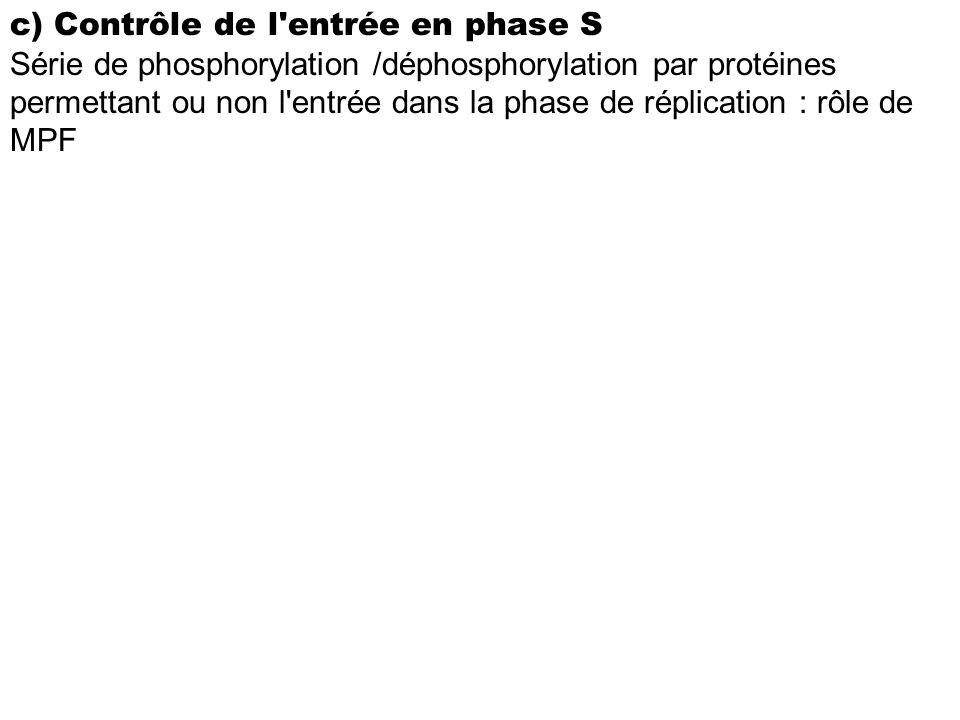 c) Contrôle de l'entrée en phase S Série de phosphorylation /déphosphorylation par protéines permettant ou non l'entrée dans la phase de réplication :
