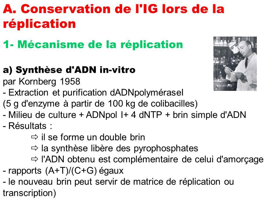 A. Conservation de l'IG lors de la réplication 1- Mécanisme de la réplication a) Synthèse d'ADN in-vitro par Kornberg 1958 - Extraction et purificatio