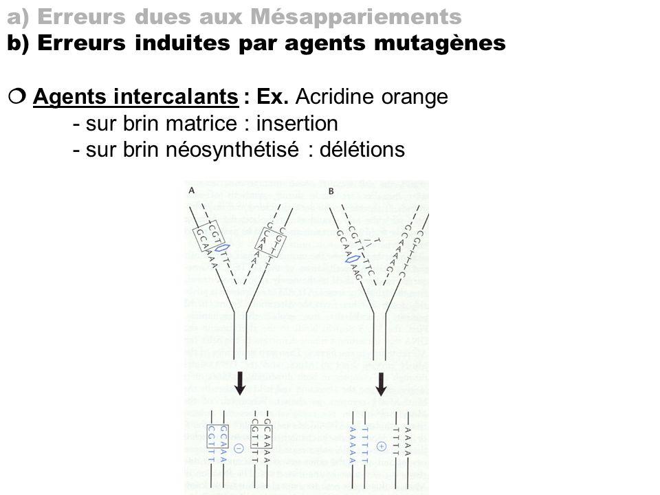 a) Erreurs dues aux Mésappariements b) Erreurs induites par agents mutagènes Agents intercalants : Ex. Acridine orange - sur brin matrice : insertion