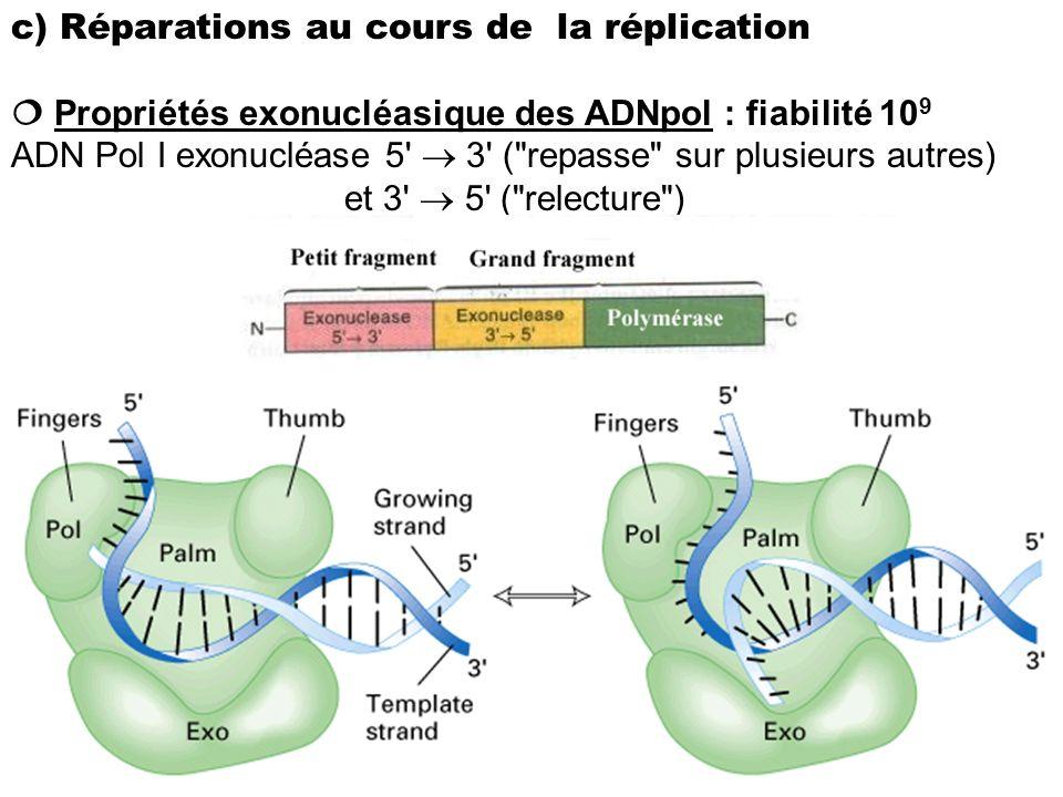 c) Réparations au cours de la réplication Propriétés exonucléasique des ADNpol : fiabilité 10 9 ADN Pol I exonucléase 5' 3' (