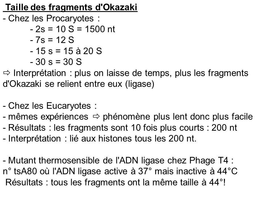 Taille des fragments d'Okazaki - Chez les Procaryotes : - 2s = 10 S = 1500 nt - 7s = 12 S - 15 s = 15 à 20 S - 30 s = 30 S Interprétation : plus on la