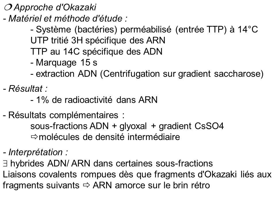 Taille des amorces ARN - Chez Procaryotes : 5 nt (sur 1500nt du fragment d Okazaki) dans 80% des cas une base Adénosine en position 5 - Chez Eucaryotes : 12nt (sur 200 nt du fragment d Okazaki)