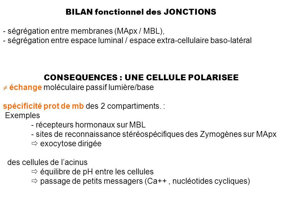 BILAN fonctionnel des JONCTIONS - ségrégation entre membranes (MApx / MBL), - ségrégation entre espace luminal / espace extra-cellulaire baso-latéral