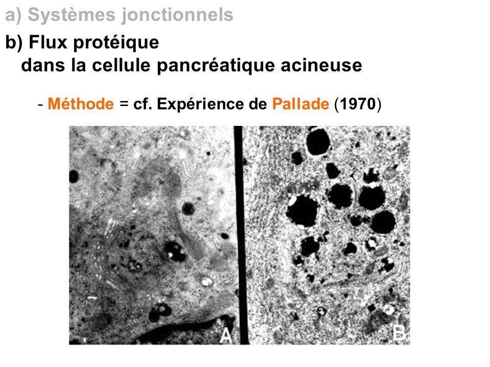 - Méthode = cf. Expérience de Pallade (1970) a) Systèmes jonctionnels b) Flux protéique dans la cellule pancréatique acineuse