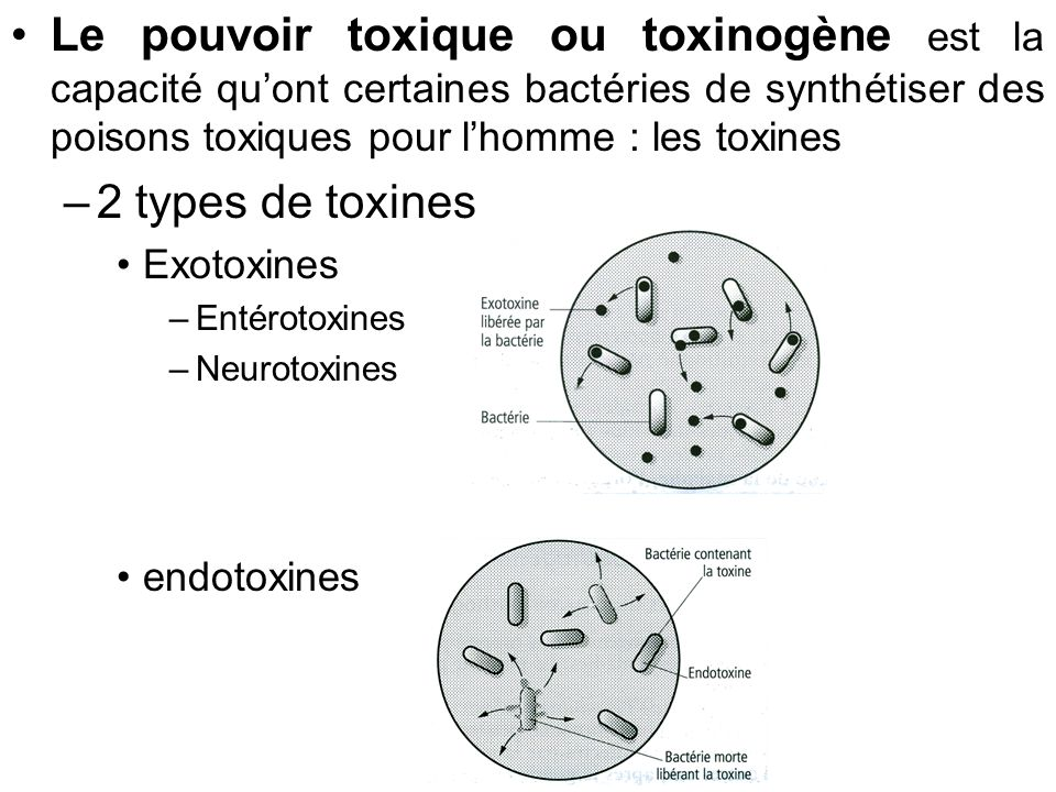 Le pouvoir toxique ou toxinogène est la capacité quont certaines bactéries de synthétiser des poisons toxiques pour lhomme : les toxines –2 types de t
