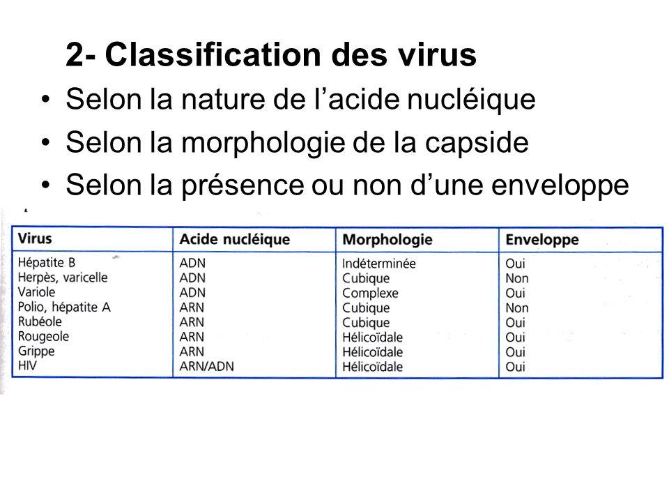 2- Classification des virus Selon la nature de lacide nucléique Selon la morphologie de la capside Selon la présence ou non dune enveloppe