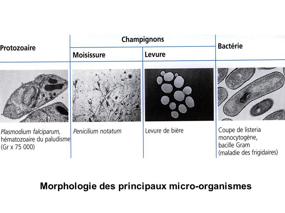 2- Structure de la cellule bactérienne Cellule procaryote Absence dorganites cytoplasmiques limités par une membrane Structures constantes et structures inconstantes