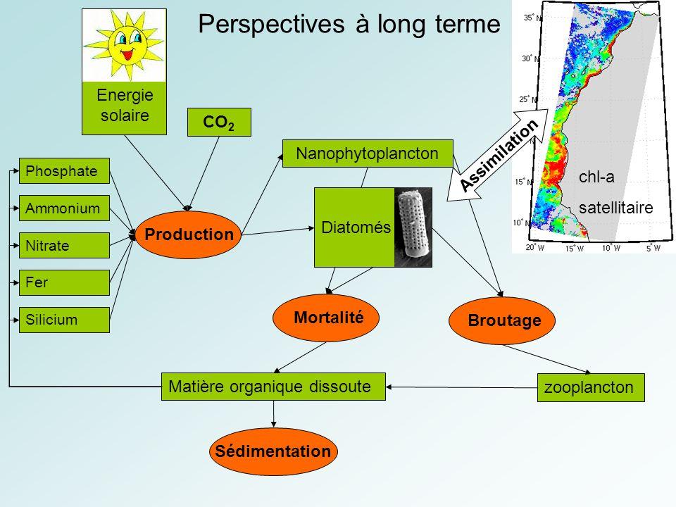 Perspectives à long terme Phosphate Ammonium Nitrate Fer Silicium Nanophytoplancton Matière organique dissoute chl-a satellitaire zooplancton Energie solaire Production MortalitéBroutageSédimentation Diatomés Assimilation CO 2
