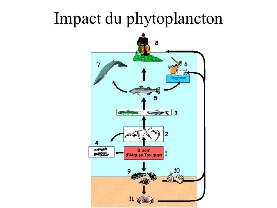 Impact du phytoplancton