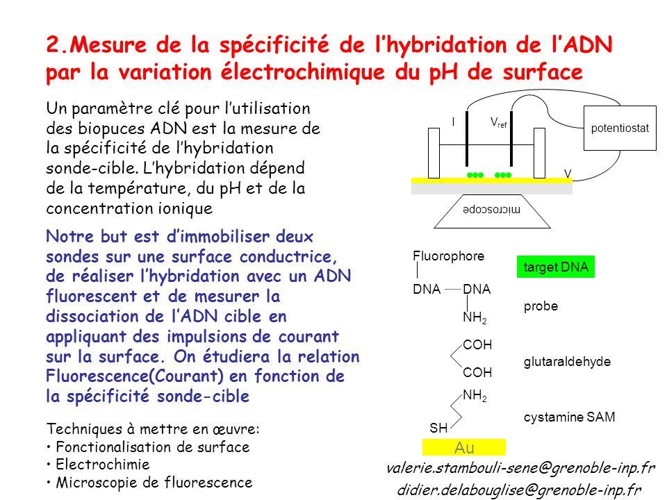 2.Mesure de la spécificité de lhybridation de lADN par la variation électrochimique du pH de surface Un paramètre clé pour lutilisation des biopuces ADN est la mesure de la spécificité de lhybridation sonde-cible.