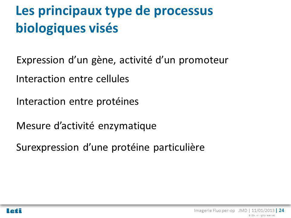 © CEA. All rights reserved Imagerie Fluo per-op JMD | 11/01/2013 | 24 Les principaux type de processus biologiques visés Expression dun gène, activité