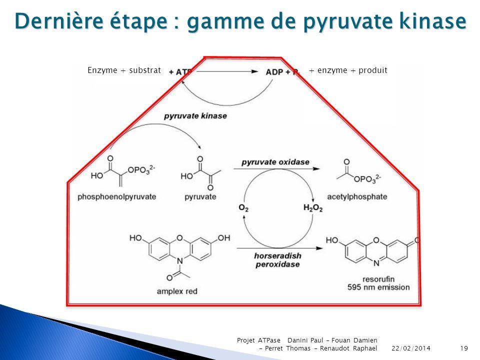 22/02/2014 Projet ATPase Danini Paul - Fouan Damien - Perret Thomas - Renaudot Raphael19 Dernière étape : gamme de pyruvate kinase Enzyme + substrat+