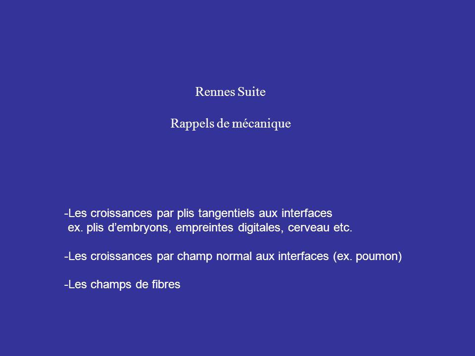 Rennes Suite Rappels de mécanique -Les croissances par plis tangentiels aux interfaces ex. plis dembryons, empreintes digitales, cerveau etc. -Les cro