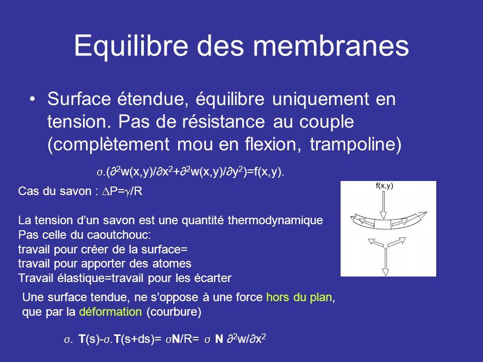 Equilibre des membranes Surface étendue, équilibre uniquement en tension. Pas de résistance au couple (complètement mou en flexion, trampoline).( 2 w(