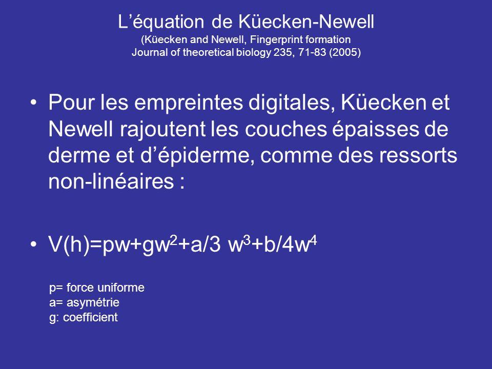 Léquation de Küecken-Newell (Küecken and Newell, Fingerprint formation Journal of theoretical biology 235, 71-83 (2005) Pour les empreintes digitales,